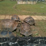 This biggest tortoises I've ever seen