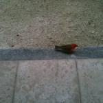One of the little birds that greeted us each morning